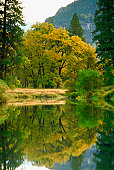 Reflection of trees in Merced River, Yosemite National Park, California, USA