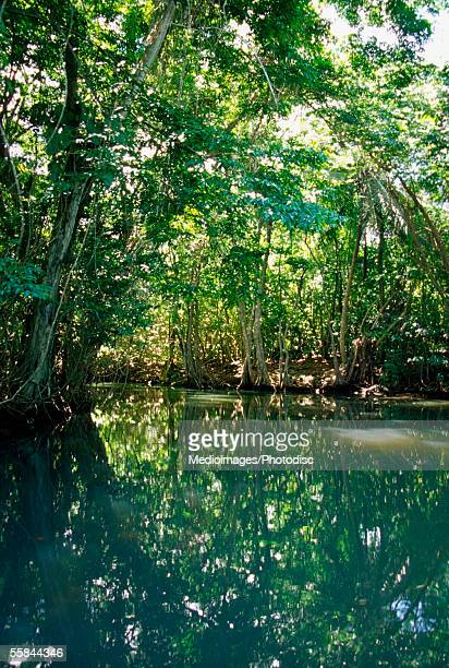 Reflection of trees in river, Indian River, Portsmouth, Dominica