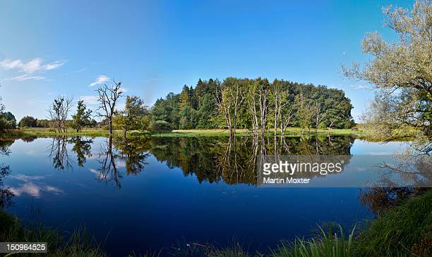 Reflection of trees in swamp, Starnberg Lake, Upper Bavaria, Bavaria, Germany