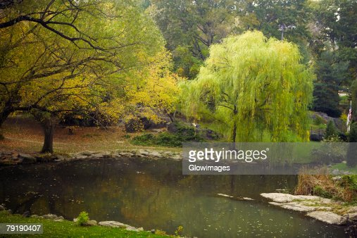 Reflection of trees in water, Central Park, Manhattan, New York City, New York State, USA : Foto de stock