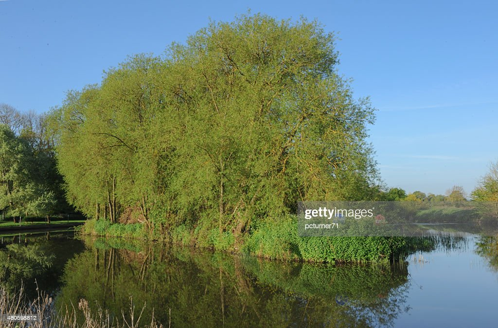 Reflection on The River Avon, Stratford upon Avon, Warwickshire, England : Stock Photo