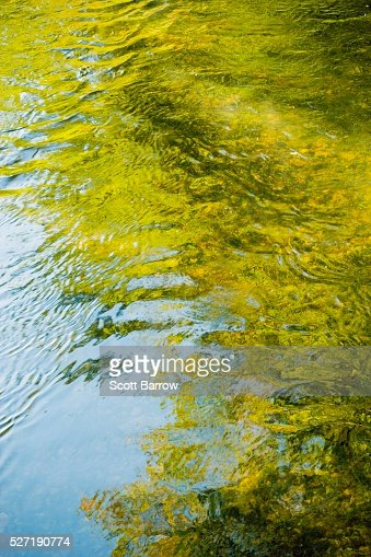 Reflection on water : Bildbanksbilder