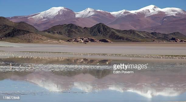 reflections in Laguna Blanca