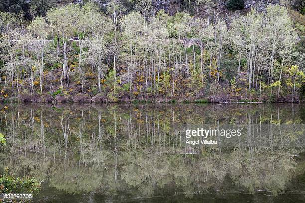 Reflections in the Duero river