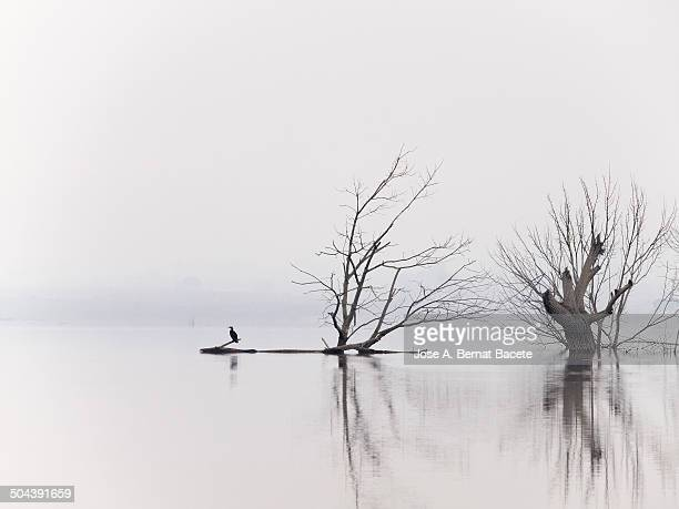 Reflections of trees on the water with fog