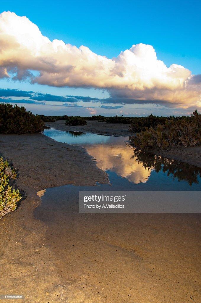 Reflexion on the sea shore : Stock Photo
