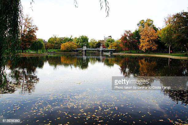 Reflexions at the lake
