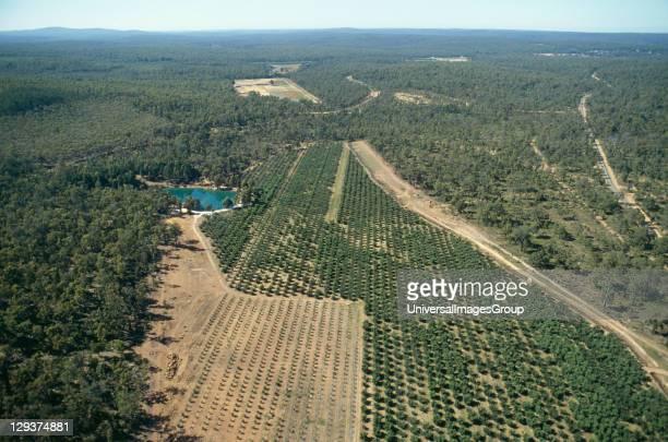 Reforestation Australia Western Australia Darling Range Jarrahdale Mine Vicinity Perth Reforestation Of Bauxite Mines By Alcoa Of Australia Topsoil...
