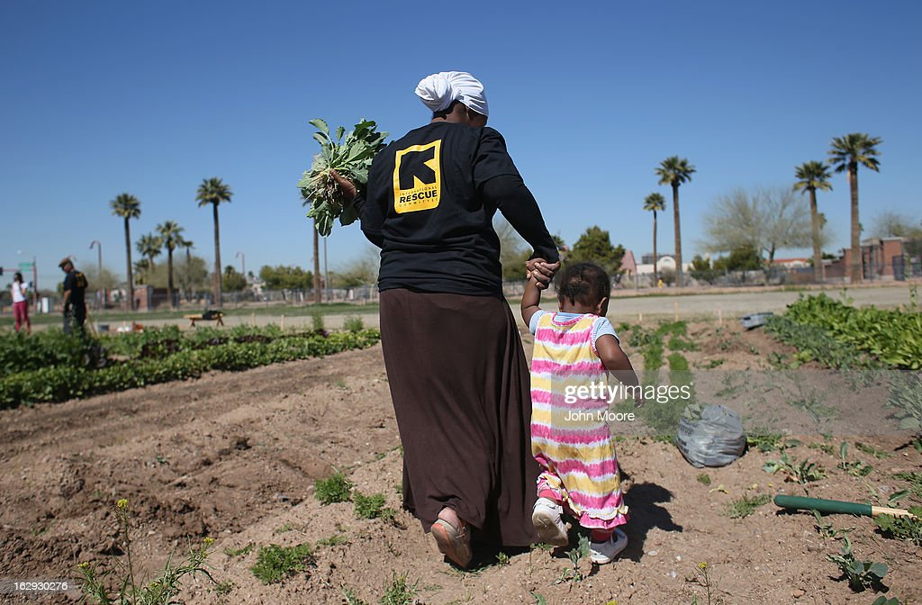 A refugee from the Democratic Republic of Congo harvests collard greens as part of the New Roots community garden program held by the International Rescue Committee (IRC), on March 1, 2013 in Phoenix, Arizona. The program is designed to help refugees, many of whom were farmers in their homeland, integrate into their new lives in America. New Roots, like many federally-funded programs, may be greatly cut back due to federal sequestration cuts. The IRC is a non-profit humanitarian aid organization that aids refugees and survivors of international conflict. They assist new arrivals, many of whom come from refugee camps and war zones, to adjust to American society after being granted refugee status and invited by the U.S. government to live in the United States. The IRC also assists refugees through the immigration and naturalization process to become U.S. citizens.