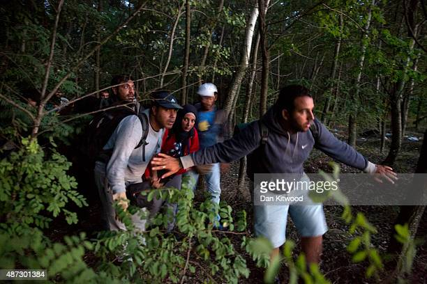 Refugees are smuggled through fields and forests in an attempt to evade the Hungarian police close to the Serbian border on September 8 2015 in...