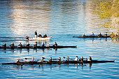 Regatta in the Potomac River, Washington DC, USA