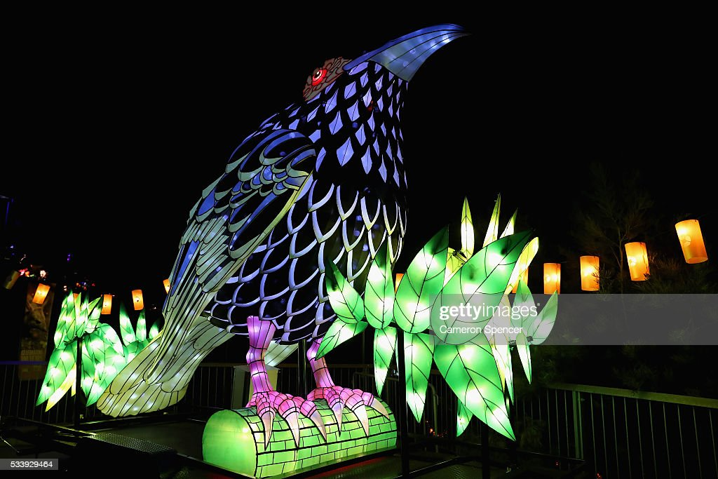 A regent honeyeater light sculpture is displayed during a media preview of Vivid Sydney illuminated displays at Taronga Zoo on May 24, 2016 in Sydney, Australia. Vivid is lighting up at Taronga Zoo for the first time with ten giant animal sculptures representing critical species the zoo is committed to protecting. Held annually, Vivid Sydney is the world's largest festival of light, music and ideas running for 23 days.