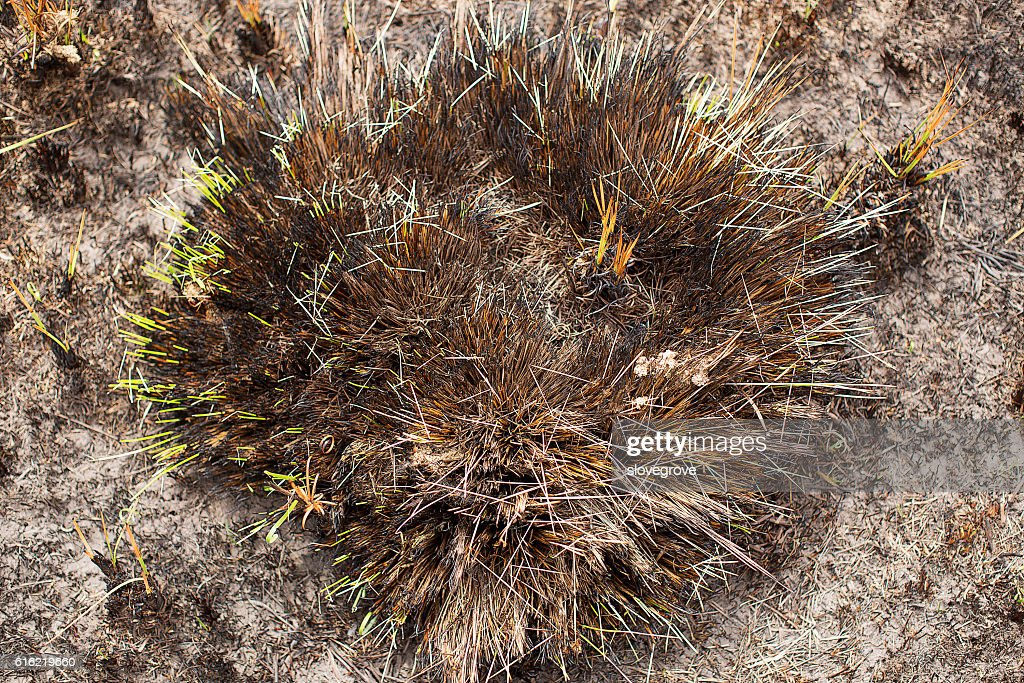 Regrowth after bushfire : Stock Photo