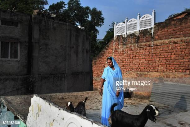 ALWAR RAJASTHAN ALWAR RAJASTHAN INDIA Rehabilitated manual scavenger Maya Sangeliya 45 walks her goats on a terrace of her house According to United...