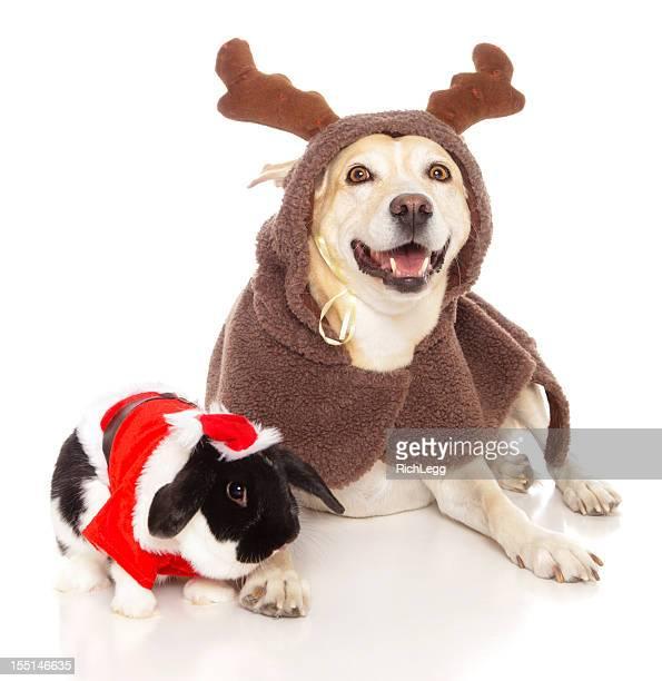 Reindeer Dog with Santa Bunny