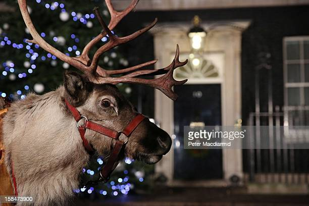 A reindeer lines up outside 10 Downing Street as a party is hosted for sick children on December 17 2012 in London England