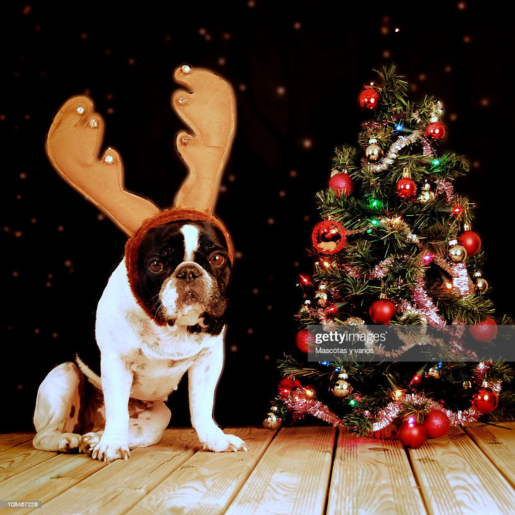 Rudolph Nuka : Stock Photo