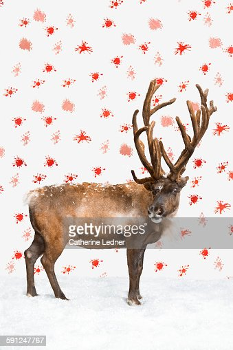 Reindeer on snow and wallpaper