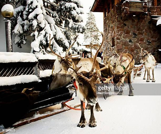 Visites de renne