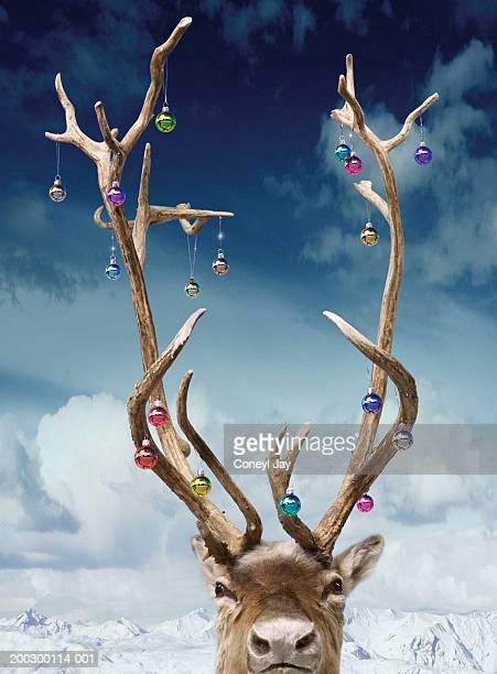 Reindeer's antlers decorated with baubles, close-up(Digital Composite)