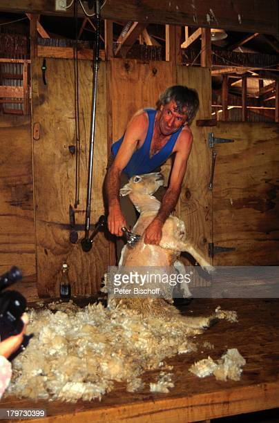 Reise Neuseeland Rotorua TouristenShow Agrodome Schaf Schafescheren Wolle