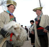 Relatives and matchmakers prepare a female sheep and other gifts before they depart to the bride's home during a local Tu ethnic minority group...