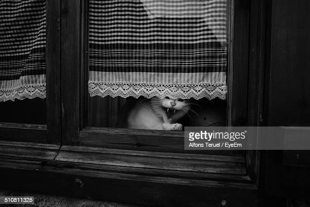 Relaxed cat yawning on window sill