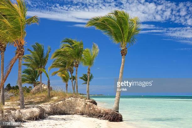 Entspannen Sie auf einem tropischen Strand