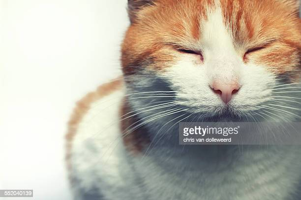 Relaxing red cat