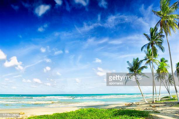 Relaxing tropical Caribbean white sand turquoise island beach palm tree