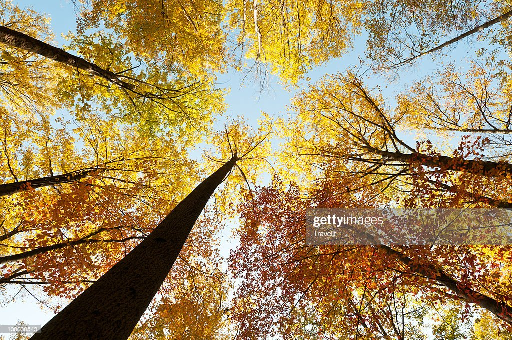 Relaxing under the crown of autumn trees : Stock Photo