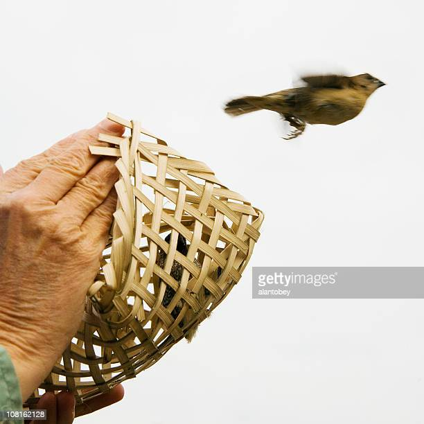 Releasing Trapped Little Bird from Wicker Cage