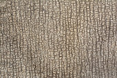 relief texture of an old cracked ruberoid resembles a bark of a tree or skin, close-up abstract background