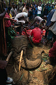 Remains of Stray Elephant Killed by Police