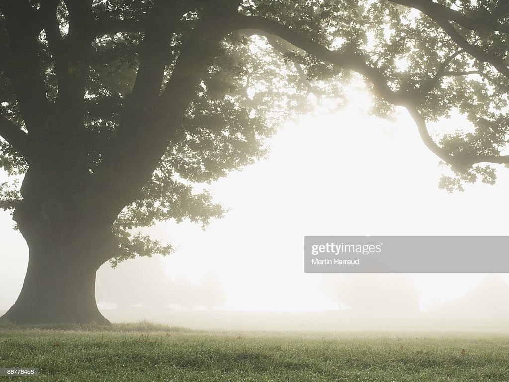 Remote fog-covered field : Stock Photo