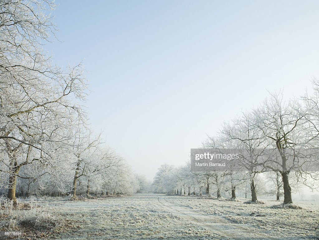 Remote snow-covered field : Stock Photo