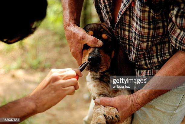 Removing dog ticks