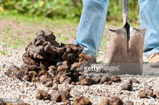 Removing Horse Dung
