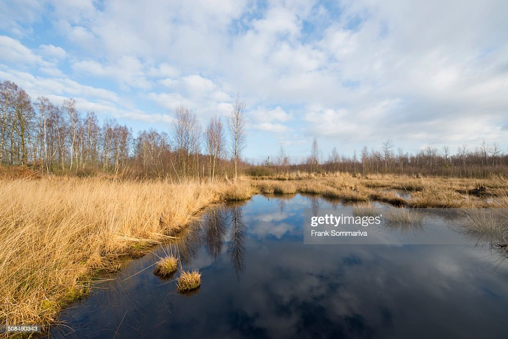 Renatured moor area where peat was cut, Grosses Moor Nature Reserve, near Gifhorn, Lower Saxony, Germany