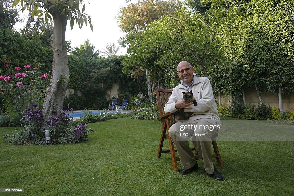 Rendezvous With Mohamed Elbaradei. Le prix Nobel de la paix 2005, Mohamed EL BARADEI posant avec son chat dans la jardin de sa maison du Caire. Avril 2010.