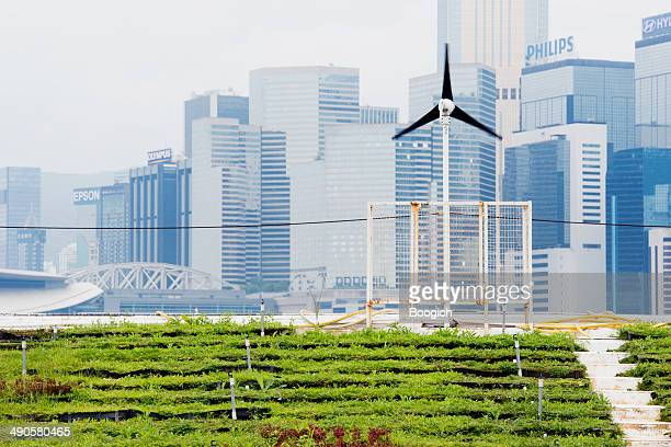 Renewable Energy Green Urban Farming in Hong Kong China