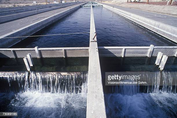 'Replenishing lakes at the Fish Springs Hatchery, North of Lone Pine, CA'