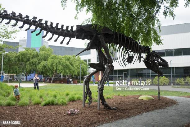 Replica of a dinosaur skeleton at the Googleplex headquarters of Google Inc in the Silicon Valley town of Mountain View California April 7 2017 The...