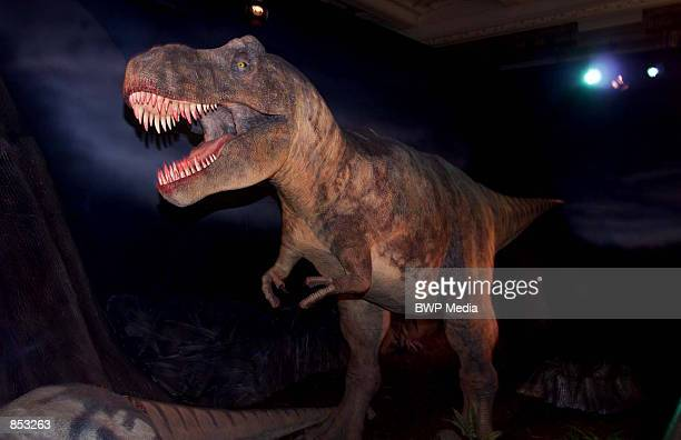 A replica of a Tyrannosaurus Rex is on exhibit at the Natural History Museum February 23 2001 in London England The display which moves in response...