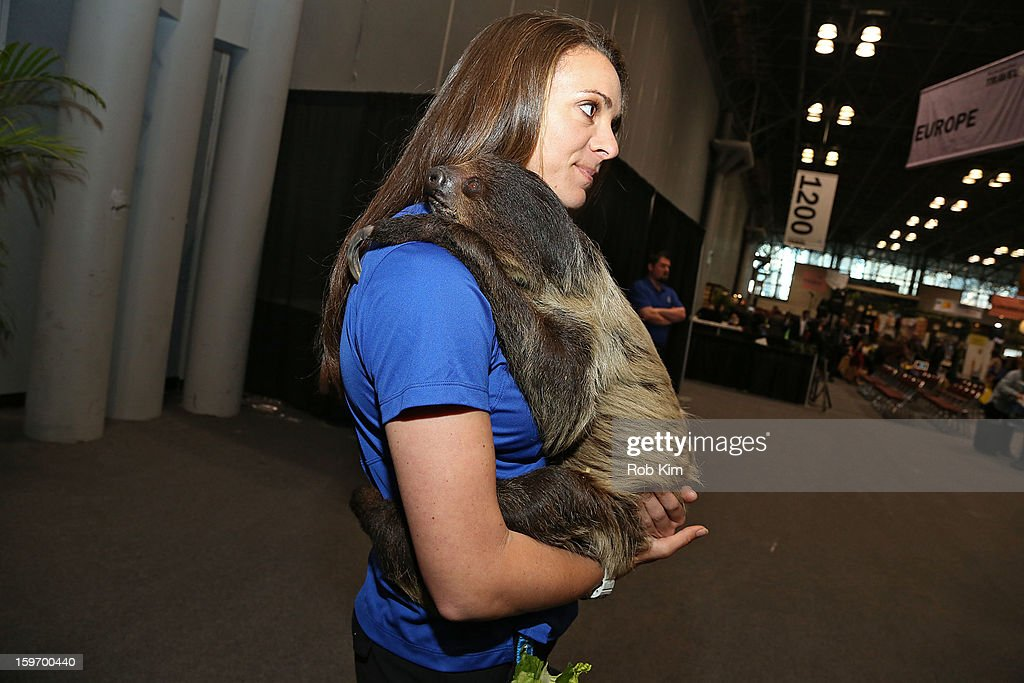 A representative from Busch Gardens holds a sloth at The 10th Annual New York Times Travel Show Ribbon Cutting And Preview at Javits Center on January 18, 2013 in New York City.