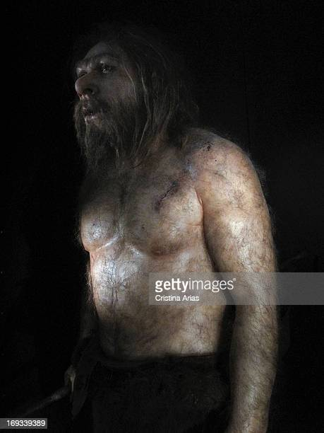 Reproduction of a neanderthal in the Hall of Hominids of the Museum of Human Evolution Burgos Castile and León Spain
