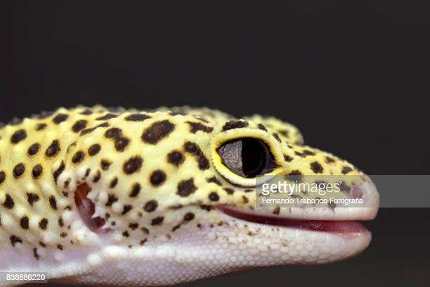 Reptile head with black background