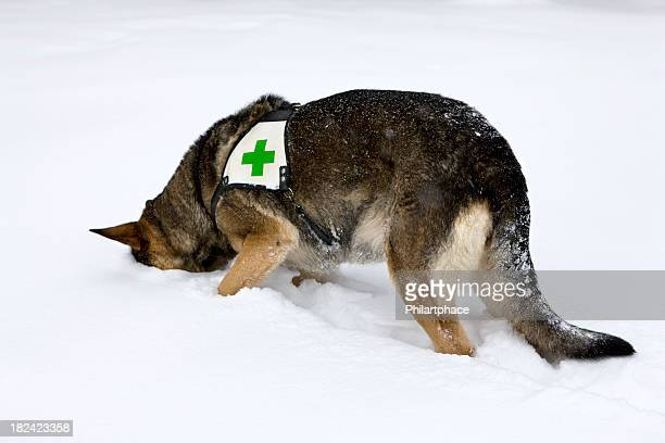 rescue dog in winter