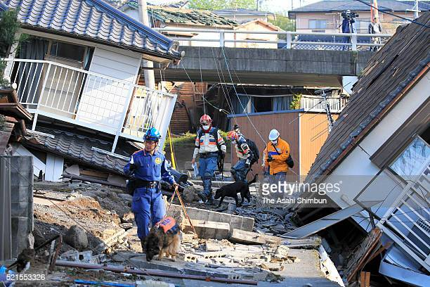 Rescue dogs are brought in for the searching operation on April 16 2016 in Mashiki Kumamoto Japan The magnitude 73 earthquake hit Kyushu just after...