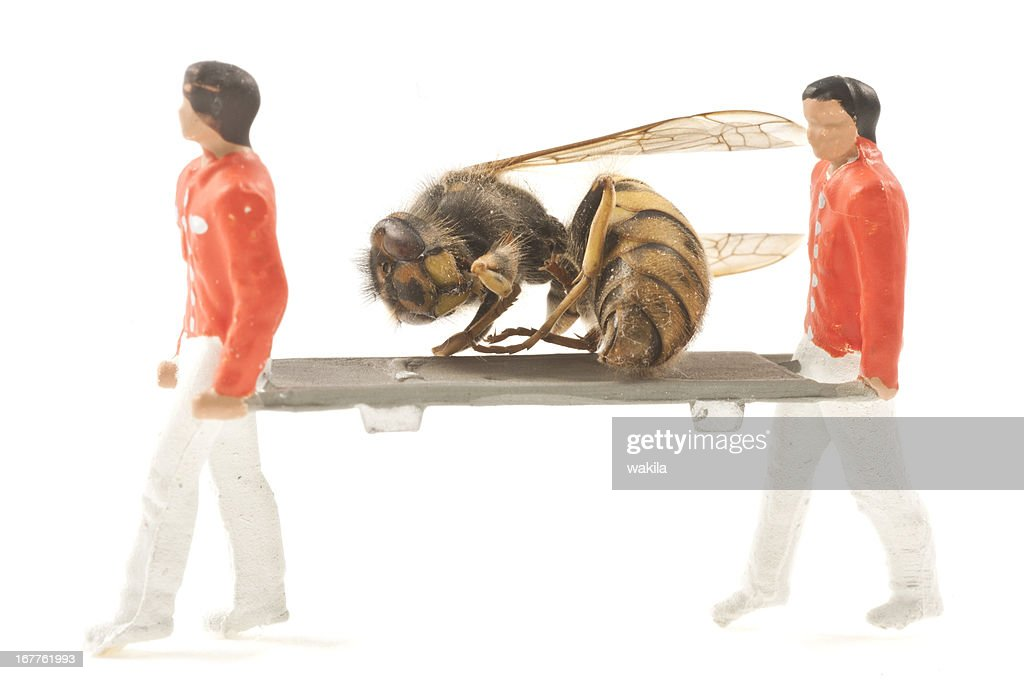 rescue hornet : Stock Photo